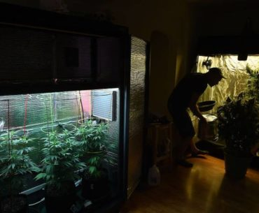 Landlords get protections in marijuana-cultivation law